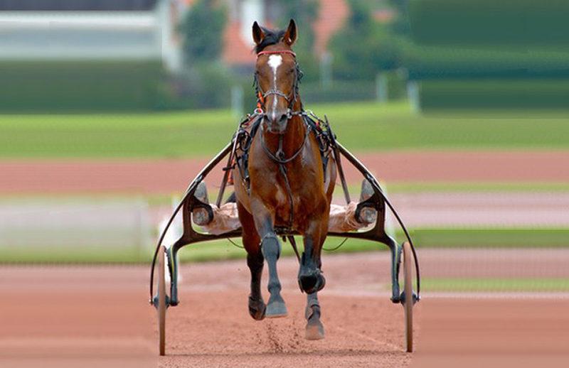 Acheter un cheval de course les modes d'acquisition