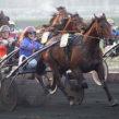 Résultats des chevaux conseillé à la vente par Didier Louis