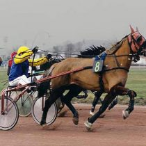 Aspects financiers d'un cheval de course