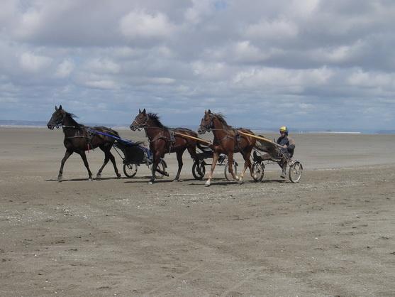 Carrière d'un cheval de course