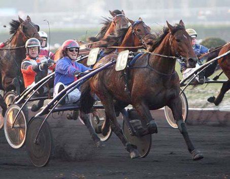 Résultats 2016 / 2017 des chevaux conseillé à la vente par Didier Louis
