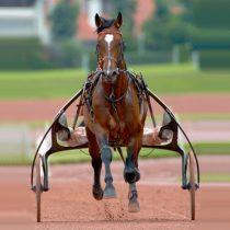 Devenez copropriétaire d'une part d'un cheval de course